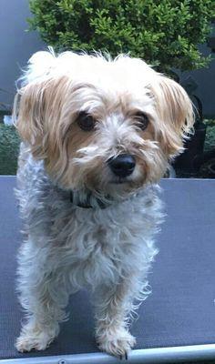 Hunde Foto: Angelika und Cleo - Unser knuffiger Liebling Hier Dein Bild hochladen: http://ichliebehunde.com/hund-des-tages  #hund #hunde #hundebild #hundebilder #dog #dogs #dogfun  #dogpic #dogpictures