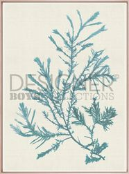 LIVING SPACE - DESIGNER BOYS - Seaweed Subject VI (Blue) (Canvas)