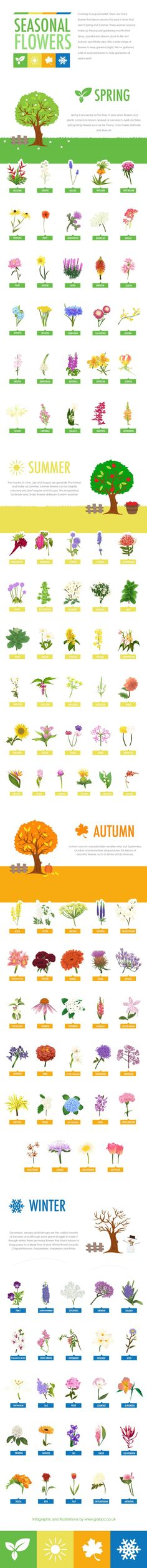 Contrary to popular belief, there are many flowers that bloom around the year in times that aren't Spring and Summer. Summer and Spring are popular gardening seasons and bring colourful and vibrant plants to life, but Autumn and Winter also offer a wide range of flowers to keep gardens bright. Here's a list of seasonal flowers to help gardeners all year round!