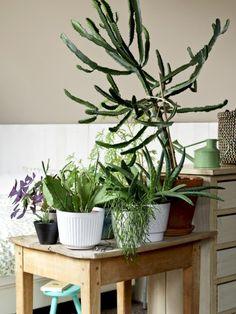 8-planten-tafel