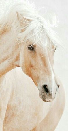 Whispers of August~ – Pferde – Adorable Animals Most Beautiful Horses, All The Pretty Horses, Animals Beautiful, Cute Animals, Majestic Horse, Majestic Animals, Horse Face, Tier Fotos, White Horses