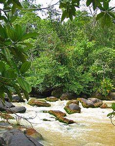 Geography of French Guiana, landforms, Amazon rainforest - World Atlas