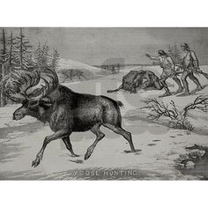 Vintage woodcut featuring a moose hunt - unique and rare woodcut