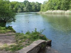 3 6 16 Cannop ponds, Forest of Dean, Gloucestershire..