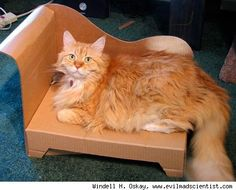 For the Fancy Cat Who Loves Cardboard Boxes - Urlesque