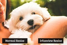 Ever wanted to enlarge an image without quality loss? Learn how to resize images to make them larger without losing quality in Photoshop, Irfanview and GIMP.