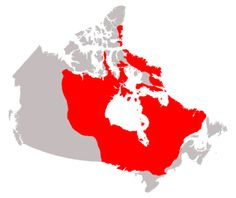 The Canadian Shield is the horseshoe shaped area that covers about half of Canada and is the the main source of Canada's minerals which include gold, silver, iron, and copper. It's the world's largest producer in zinc and nickel. Canada is also one of the most prosperous nations in the world.