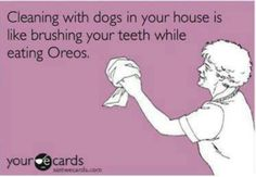 Cleaning with Siberian Huskies there is a constant supply of dog hair lol