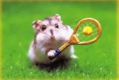 A hamster with a tennis racket