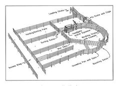 A design like the picture above shows the handling facility that will be on on my cow-calf operation. This facility is located according to access from pastures, so cattle can go from pastures into the holding and sorting pens. Once in these pens cattle can follow through the layout where we can easily bring them into the squeeze chute. Also the facility will help us load the cattle when transporting.