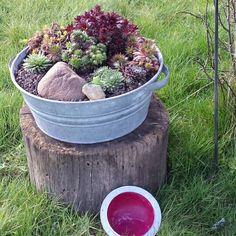Zinkwanne bepflanzt garten pinterest for Gartengestaltung zinkwanne