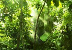 Tropikalny las, drzewa w słońcu i deszczu na obrazach Redro. Najlepszej jakości fototapety, naklejki, obrazy, plakaty, poduszki. Chcesz ozdobić swój dom? Tylko z Redro