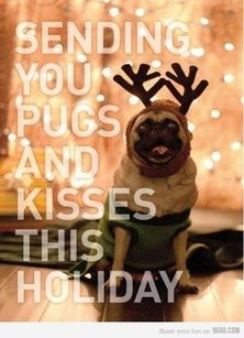 Pugs and kisses.