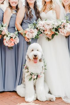 Femme Baltimore Wedding With The Sweetest Dog of Honor Wedding Dress Organza, Wedding Dresses, Modest Wedding, Dog Wedding Outfits, Dog Wedding Attire, Dog Wedding Dress, Collier Floral, Dream Wedding, Wedding Day