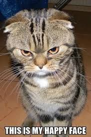 Image result for angry cat face images