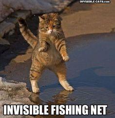 i love invisible cats!