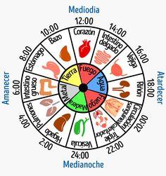 Por qué estás despertando al mismo tiempo todas las noches | Noticias de Ponce by BPO Reiki, Reduce Thigh Fat, Reflexology Massage, I Ching, Tarot Card Meanings, Health Heal, Acupressure Points, Stress, Traditional Chinese Medicine