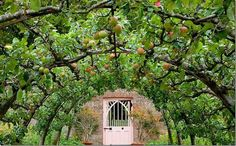 Espalier apple tree arch at Highgrove | Shaping ideas- tunnel arch