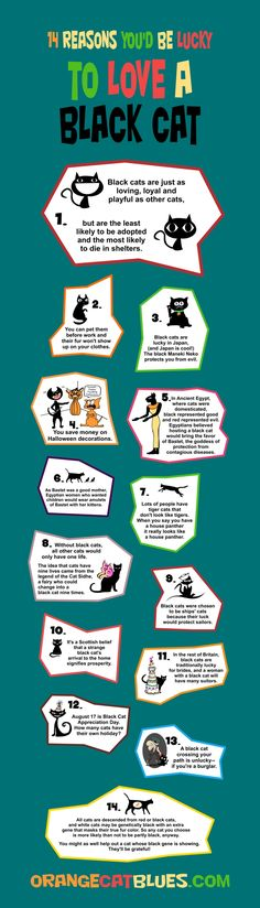 14 reasons you'd be lucky to love a black cat. Infographic #cats #adoption #pets