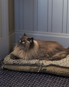 Sew a pillow that can be placed right on top of your cat's regular bed.
