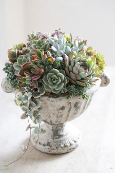 Beautiful mounding succulent arrangement in compote To be able to have a great Modern Garden Decoration, it's useful to be … Succulent Gardening, Succulent Care, Succulent Pots, Container Gardening, Indoor Gardening, Succulents In Containers, Cacti And Succulents, Planting Succulents, Potted Plants