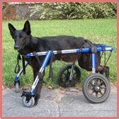 Walkin' Wheels® Four Wheel, Fully Supportive Dog Wheelchair - No complex measuring. Adjusts for all size dogs.
