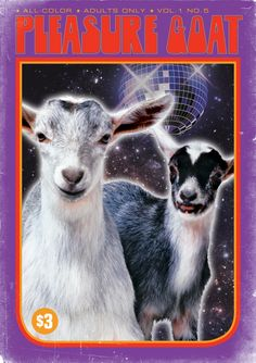 """""""Pleasure Goat"""" – the 'Adults Only' category + mirror ball are concerning"""