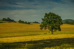 Ivana Piskáčková took this awesome photo that has field, grassland, outdoors, plateau in it Daily Photo, The World's Greatest, Country Roads, Photography, Outdoor, Outdoors, Photograph, Fotografie, Photoshoot