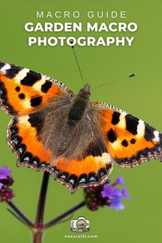 In this macro photography tutorial learn how to photograph wildlife and nature in your garden. A great guide for photographers in lockdown. Wildlife Photography Tips, Photography Basics, Photography Tips For Beginners, Underwater Photography, Photography Tutorials, Nature Photography, Take Better Photos, How To Take Photos, Cool Pictures