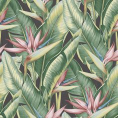 - Kenneth James by Brewster Palm Springs Arcadia Pink Banana Leaf Wallpaper Plant Wallpaper, Tropical Wallpaper, Botanical Wallpaper, Wallpaper Roll, Washable Wallpaper, Leaves Wallpaper, Spring Wallpaper, Wallpaper Borders, Palm Springs