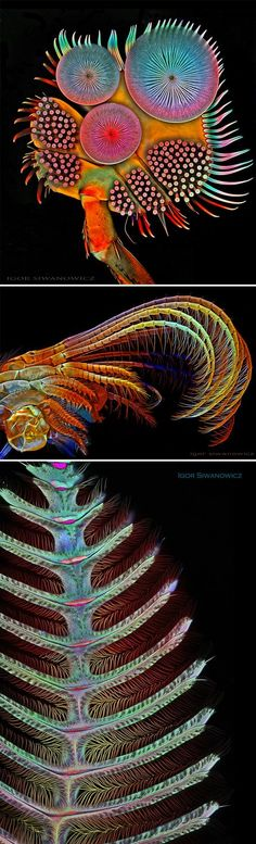 The Extraordinary Details of Insects Captured with a Laser-Scanning Microscope by Igor Siwanowicz