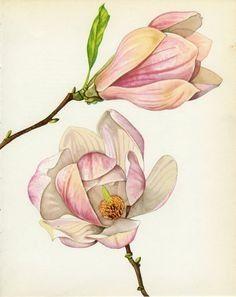 Gallery.ru / Фото #198 - цветы в акварели - ninmix