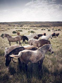 31Wild Horses Mustangs