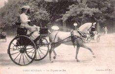Gig Carriage | Pony gig - Belgian Driving Association