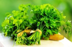 Cilantro is often referred to as coriander. It's one of the basics planted in most herb gardens indoors and out. It's relatively easy to grow. Cilantro strongly resembles parsley because it's a member of the parsley family.