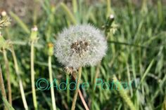 """This original photograph, """"Make a Wish"""", is now available for order and framing. DM me for details!"""