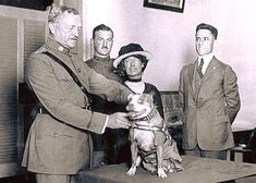 Sergeant Stubby, the most decorated dog in U.S. Military History being awarded a medal for his service in World War I by General John Pershing. Sergeant Stubby was the first dog to be given rank in the U.S. Army after he saved an entire unit of soldiers in 1918 by smelling a gas attack and then waking everyone, warning them of the danger. #history