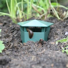 Control slugs with Haxnicks Slug Buster Traps from Harris Seeds. Order now. Slug Control, Pest Control, Garden Insects, Garden Pests, Winter Crops, Japanese Beetles, Low Maintenance Garden, Humming Bird Feeders, Organic Vegetables