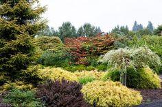 shrub border, foliage plants by Janice LeCocq Photography