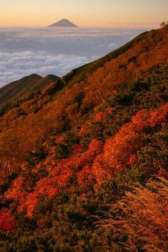 Mount Fuji view from Mount Aka (Yatsugatake) - Autumnal leaves, Nagano/Yamanashi, Japan
