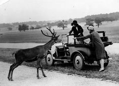 Richmond Park, London. 1930s