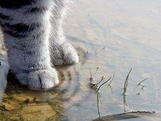 ꉂ꒰⑉˃ꈊ˂⑉꒱⍝    #neko #cat