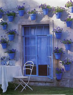 Blue pots pop against the plants & wall~