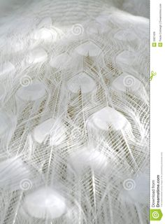 Image result for pavo real albino
