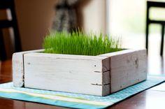 Grass indoor planters