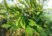 Cardamom-ginger Sensory Garden, Grow Your Own Food, Gardens, Plants, Outdoor Gardens, Plant, Garden, House Gardens, Planets