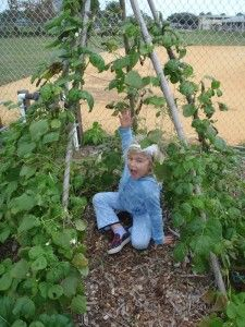Growing a pea fort Raised Garden Beds, Raised Beds, Give Peas A Chance, Growing Peas, Outdoor Play Spaces, Family Garden, Garden Spaces, Dream Garden