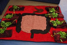The digestive system digests our food and helps the body to absorb important nutrients. Preschool Body Theme, Body Systems, Human Body, Fun, The Human Body, Funny