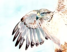 watercolor hawk - wings tattoo on back/shoulder