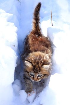Kitty playing in snow